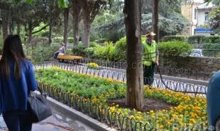 В Ялте восстанавливают цветочные клумбы на Пушкинском бульваре